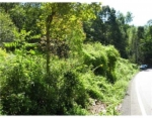 Residential Lot - Cheswick, PA