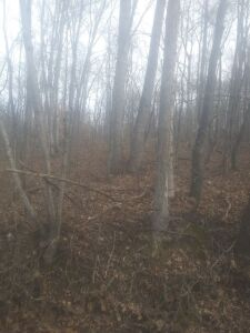 APPROX. 2.0 ACRE LOT