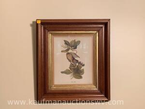 "17"" x 19"" framed mangrove cuckoo picture"