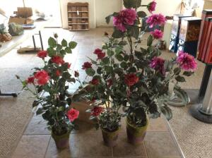 3 Matching Decorative Plants