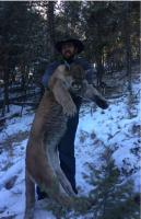Weeklong Montana Mountain Lion Hunt